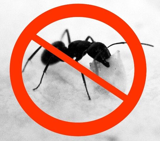 No ANTs