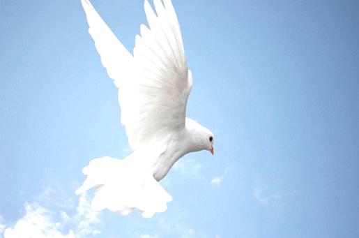 paloma volando